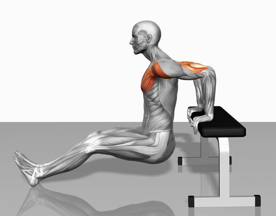 seated triceps dip muscles