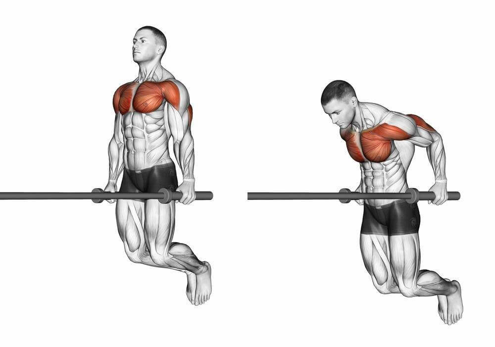 What Muscles Do Dips Work Fitlifefanatics