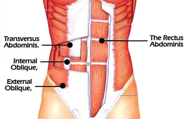 rectus abdominis for 10 pack abs