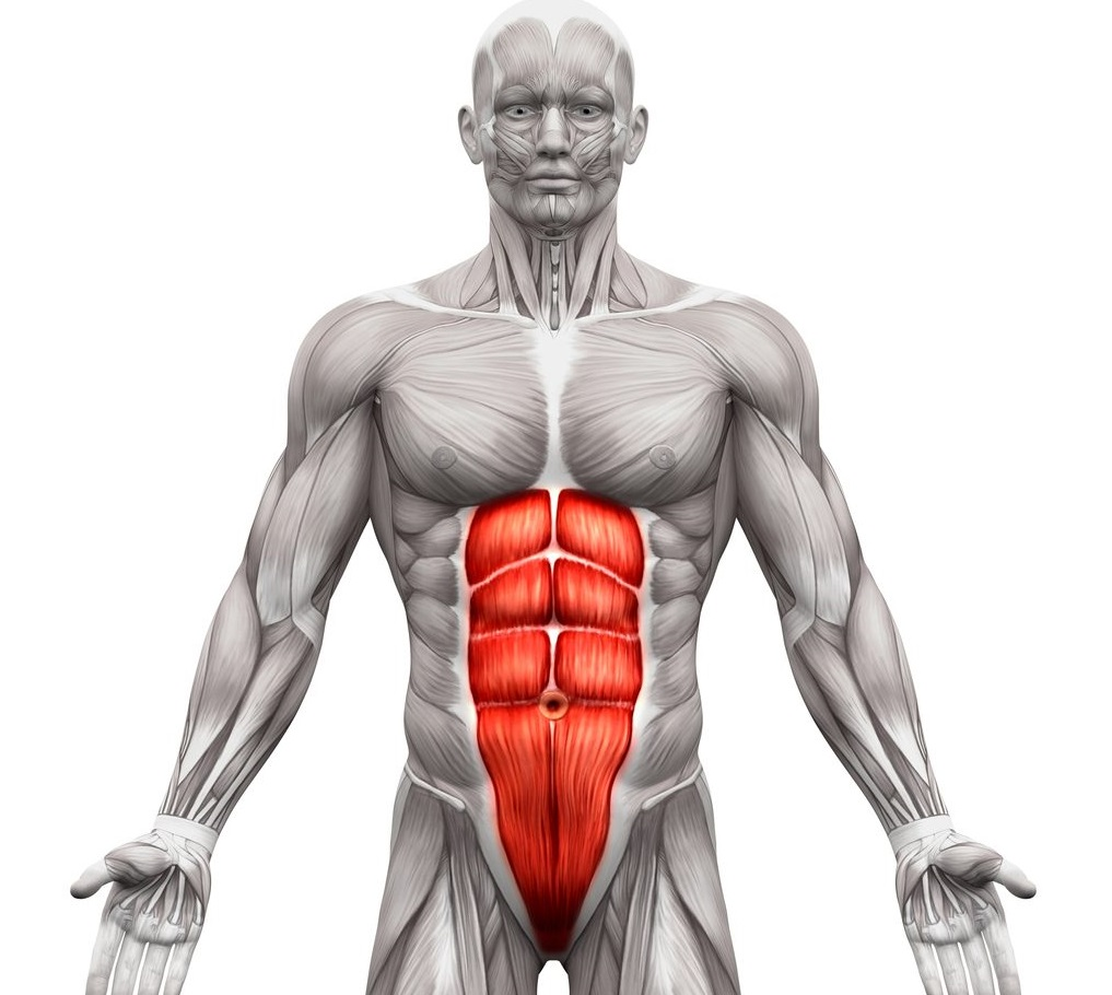 Cable Crunches-Muscles Worked - Front Abs