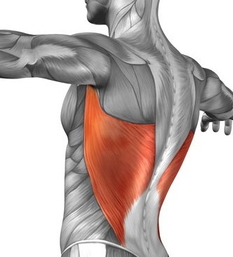 Cable Crunches-Muscles Worked - Lats