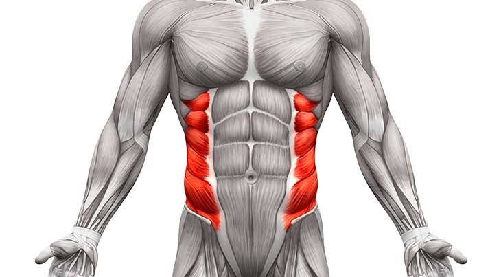 Cable Crunches-Muscles Worked - Obliques
