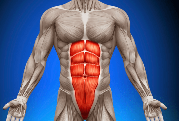 Abdominal muscles are one of the muscle groups that the roman chair sit-up exercise target