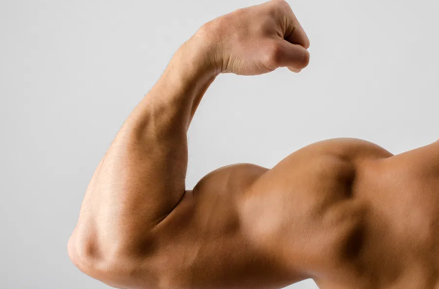 Biceps are worked by the face pulls exercise