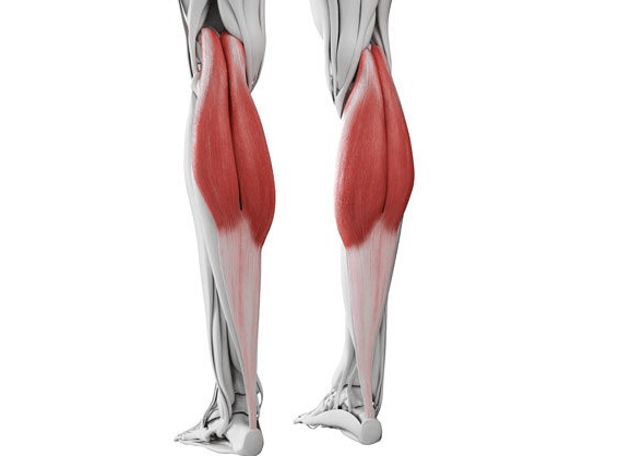 the Gastrocnemius is one of the muscles worked by the Smith machine deadlift