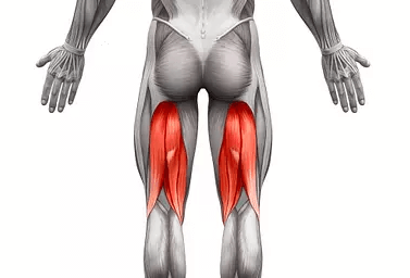 the Hamstrings is one of the muscles worked by the Smith machine deadlift