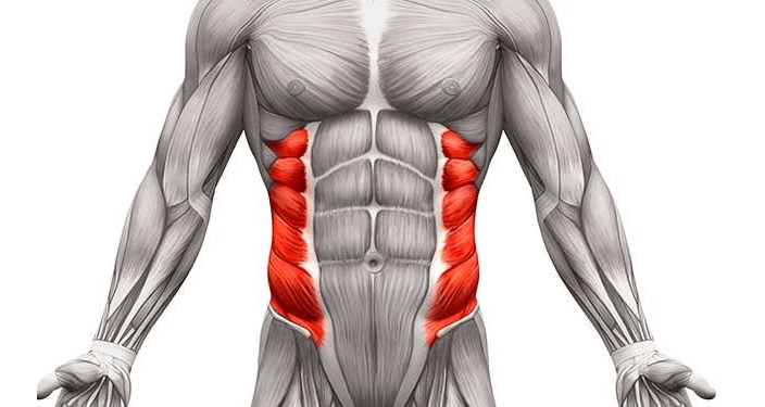 the Obliques are one of the muscle groups worked by the Smith machine deadlift