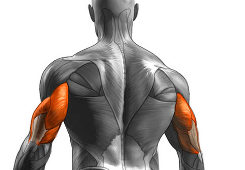 The Seated Tricep Press primarily targets the Triceps
