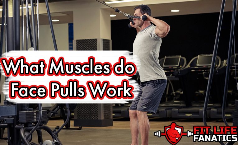 What Muscles do Face Pulls Work