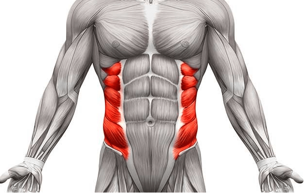 the obliques are among many secondary stabilizer muscles that the roman chair sit-ups target