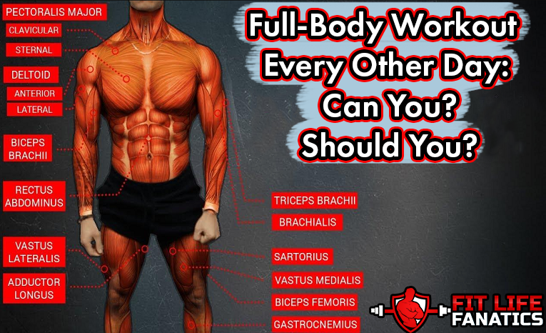 Full-Body Workout Every Other Day - Can You - Should You