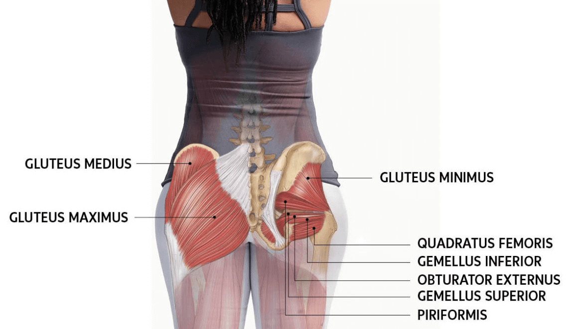Glutes are highly impacted by the Smith Machine Squat
