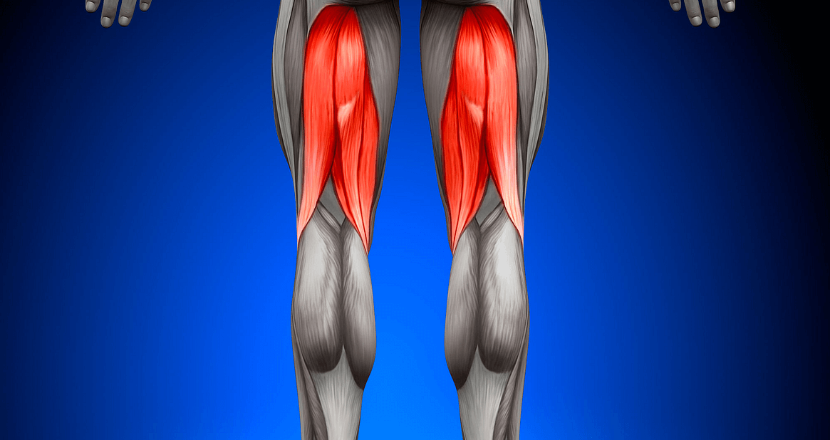 the Smith Machine Squat helps greatly in working the Hamstrings