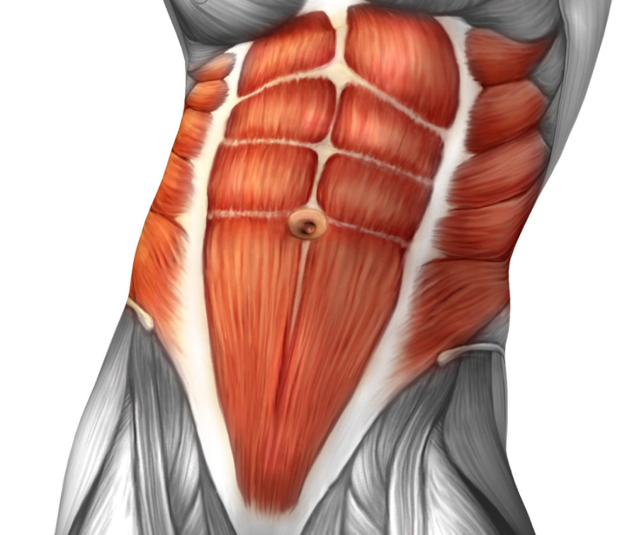 Abdominals are a secondary muscle group targeted by the shrimp squat