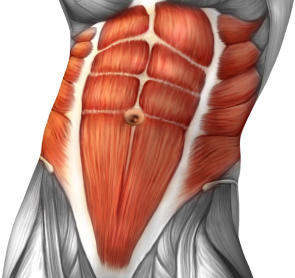 Your Core Muscles are a secondary muscle group that is worked by the t bar workout