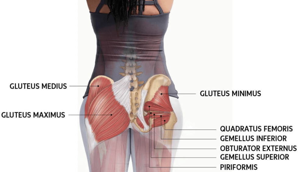 Your Glutes are worked by the t bar row exercise