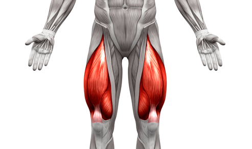 Quadriceps are one of the primary muscles targeted by the shrimp squat