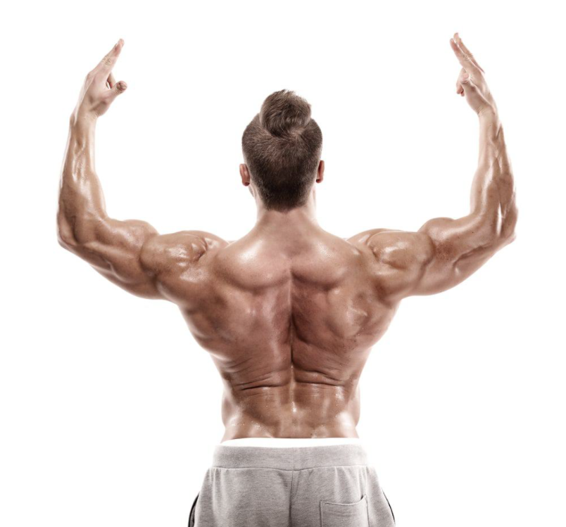 A great benefit of the low row exercise is it Strengthens Back Muscles