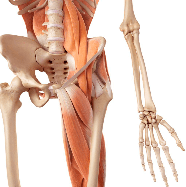 Hip Flexors are one of muscle areas worked by double crunches