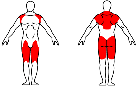 Muscles Worked by High Pulls