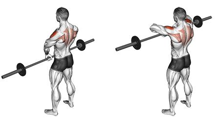 Muscles Worked by Upright Rows