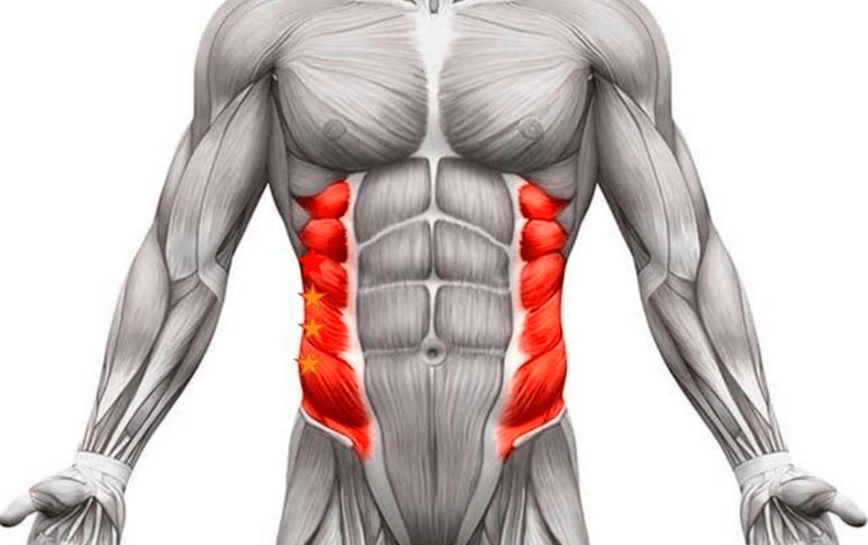 Oblique Muscles are one of muscle areas worked by double crunches