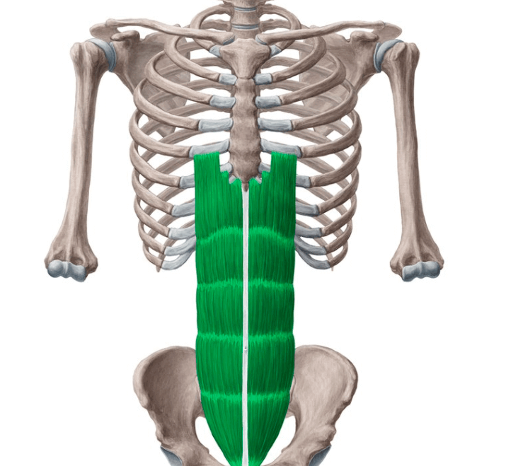 Rectus Abdominis are one of muscle areas worked by double crunches