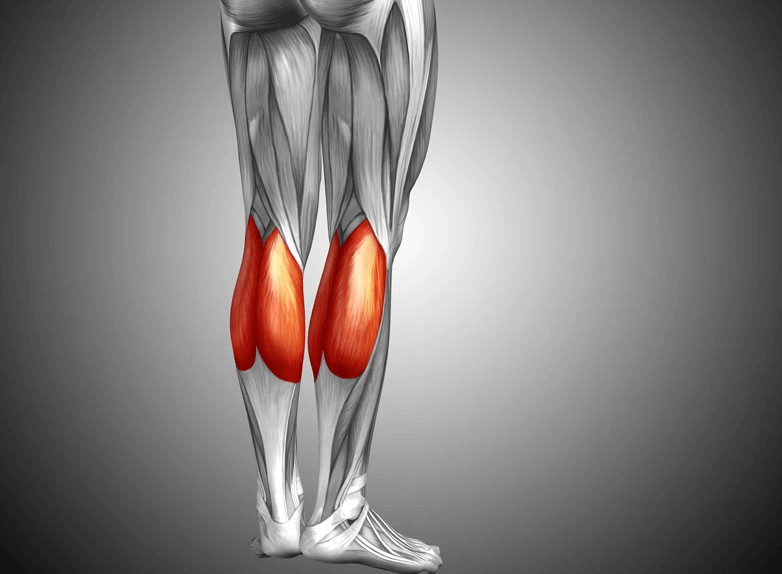 The Gastrocnemius is a muscle group worked by the Seated Calf Raise