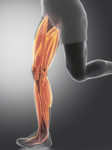 Running uses the same leg muscles as walking
