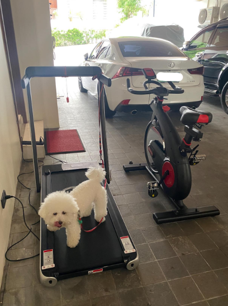 Spin bike Vs Treadmill, which one best suits you