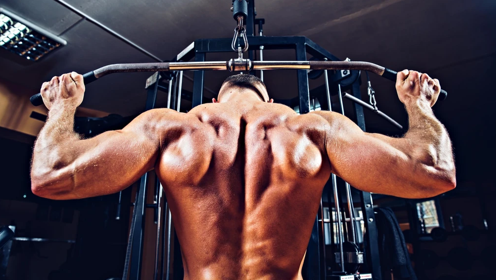 What muscles to lat pulldowns work